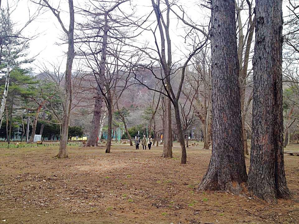 2015年4月9日の円山公園