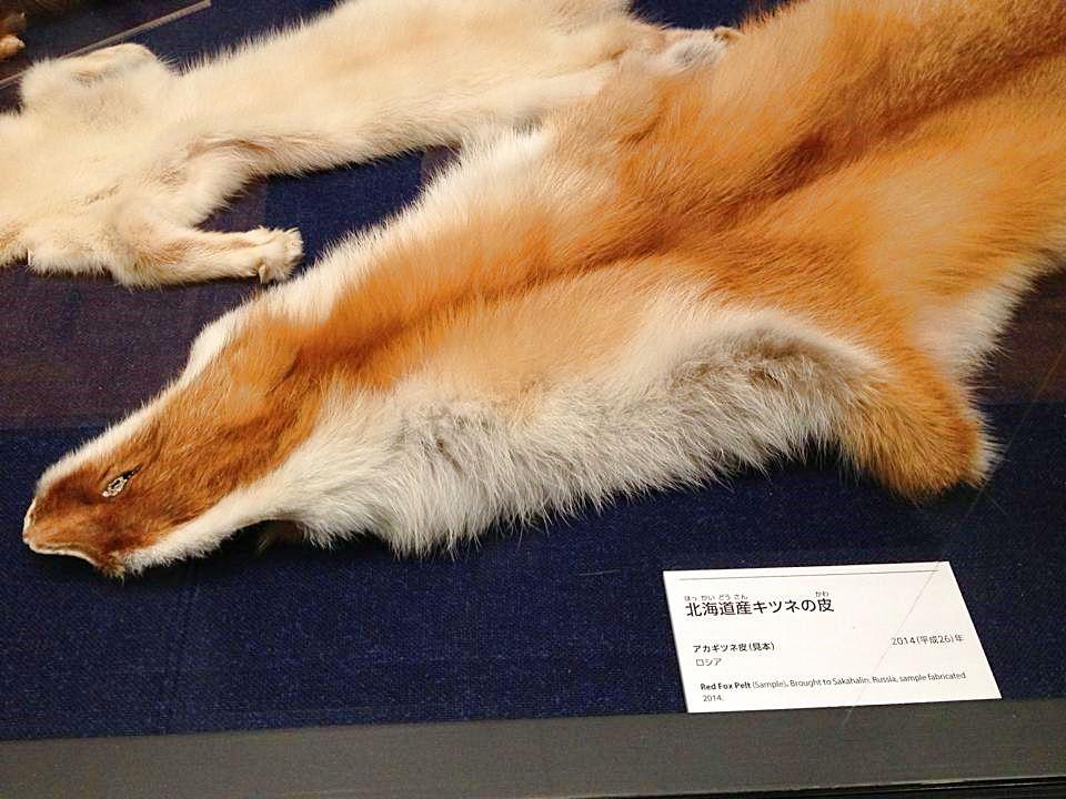北海道産キツネの皮