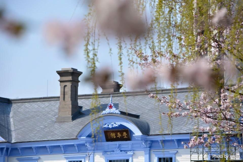 中島公園の桜(2015年)