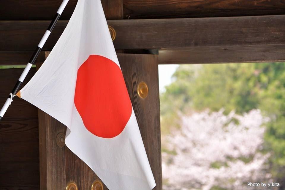 北海道神宮の桜(2015年)