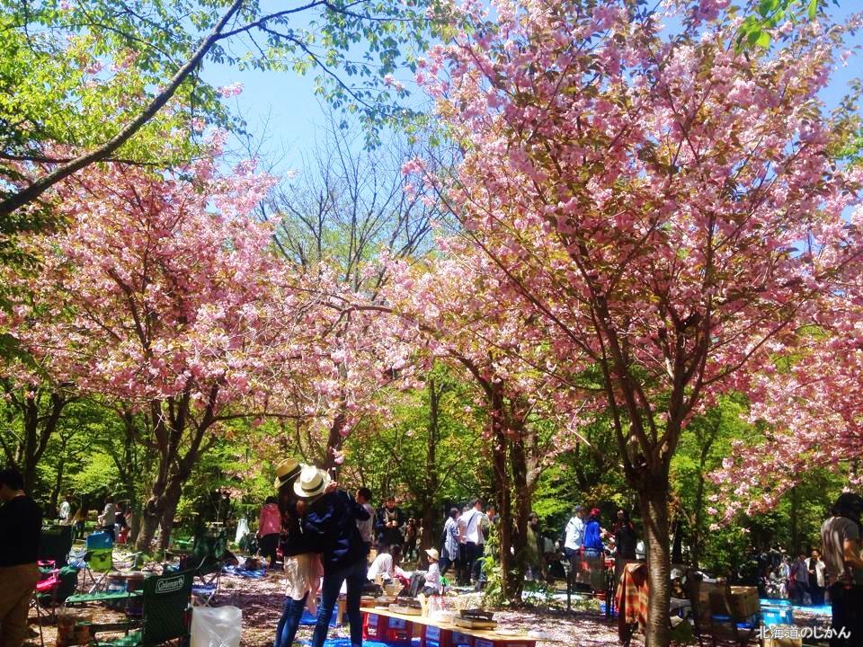 2015年5月10日撮影、北海道神宮の花見