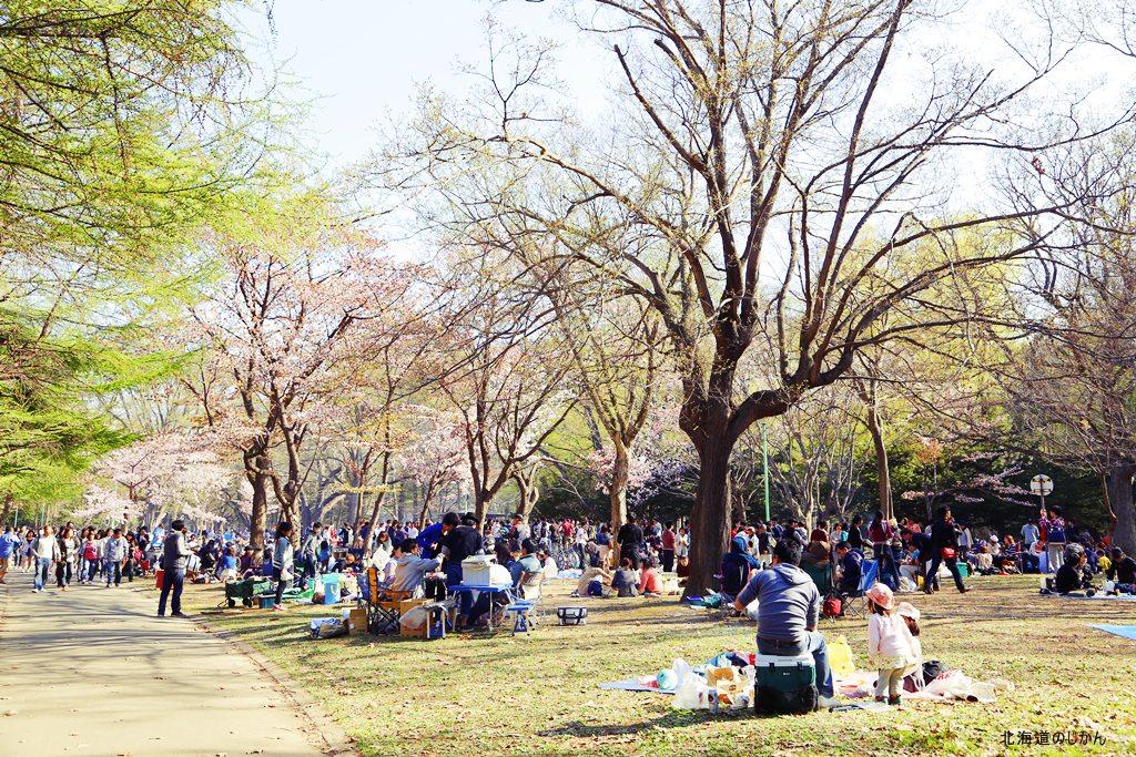 2014年の円山公園の花見