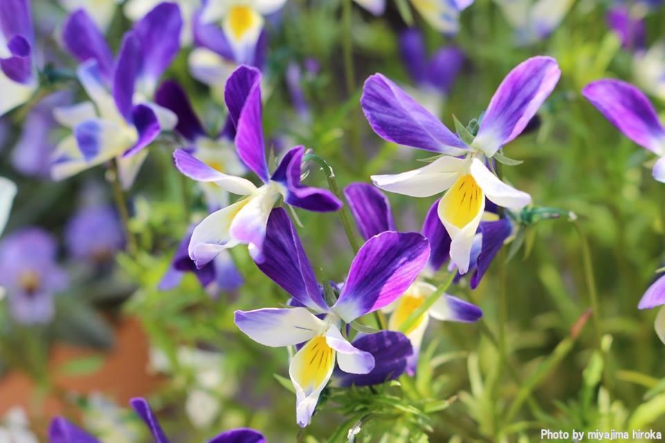 滝野すずらん丘陵公園の花たち (1)