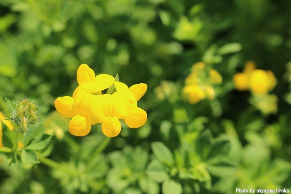 滝野すずらん丘陵公園の花たち (4)