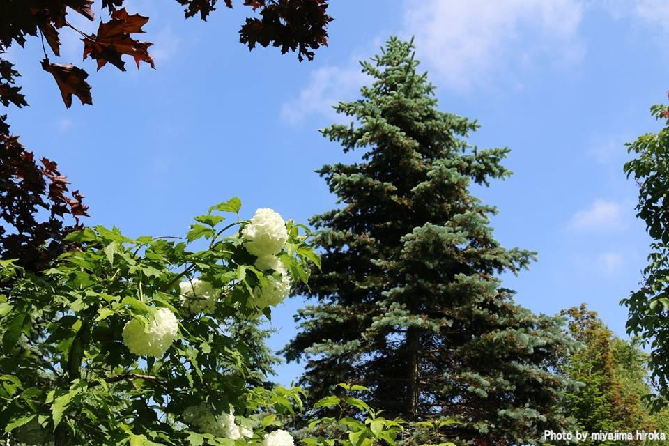 滝野すずらん丘陵公園の花たち (2)