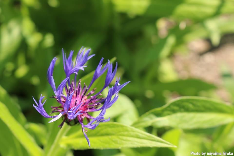 滝野すずらん丘陵公園の花たち (3)